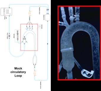 emboflow-mock-silicone-aorta