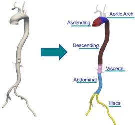 aorta_areas